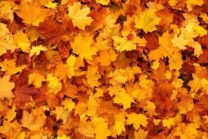 Herbstrunde beginnt